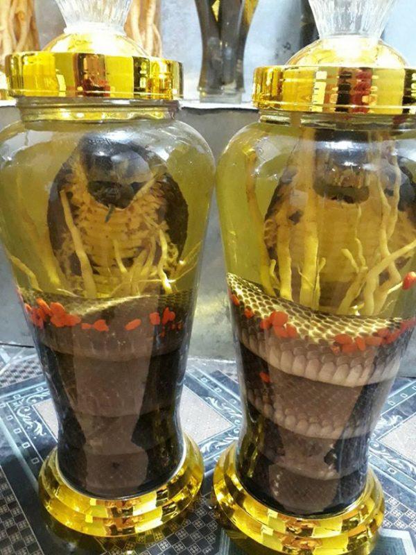 rượu kim sơn ngâm rắn